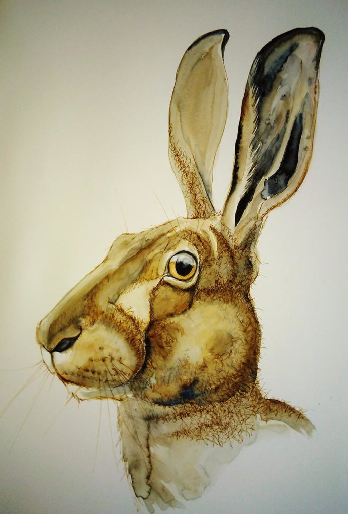 vertical hare