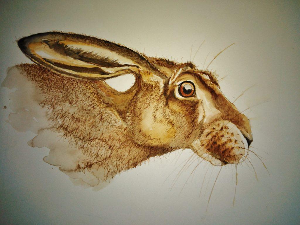 horizontal hare