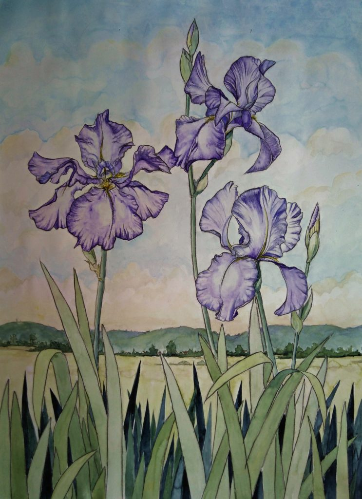 iris watercolour, revermont, three irises, purple irises, trois iris,